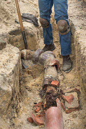 Common Sewer Line Problems - Sewer Line Augering - Tree Root Growth