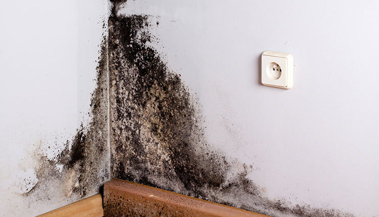 The Imperative Warning Symptoms of Black Mold Exposure